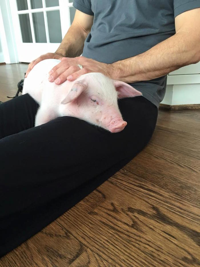 A Maryland family's ski trip was canceled so they spent their weekend saving the life of freezing little piglet.