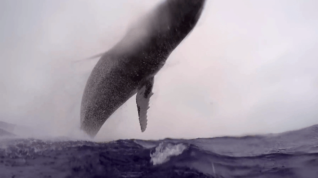 Diver almost dies capturing craziest 7 seconds of whale footage you've ever seen.