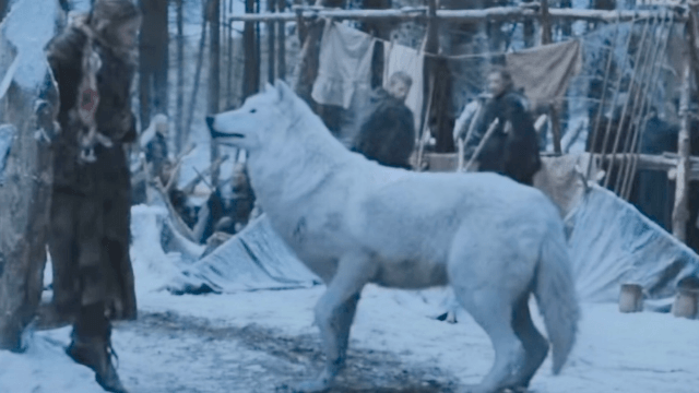 'Game of Thrones' actor explains why Jon Snow's wolf wasn't in the battle.