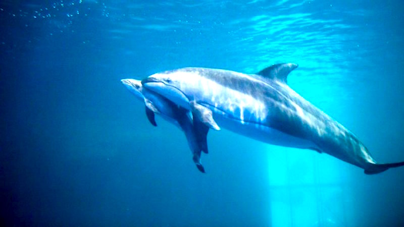 Celebrity dolphin gives birth on camera. Your move, Chrissy Teigen.