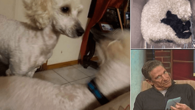 A woman's white dog gave birth to black puppies and the internet's chanting for 'Maury.'