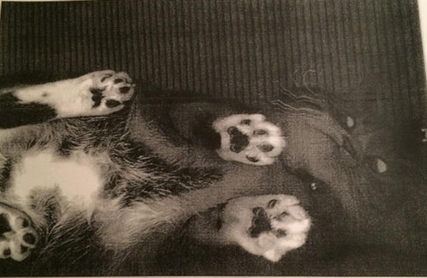 Who has been photocopying their cat at the school library?