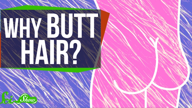 """Finally, a scientific answer to the question, """"What is the deal with butt hair?"""""""
