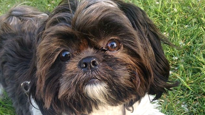 Why does your dog stare at you while he poops? Experts finally have answers.