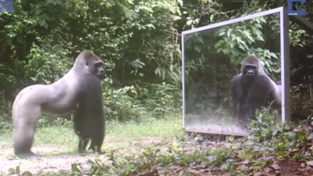 Here's what happens when a bunch of wild animals see themselves in a mirror for the first time.