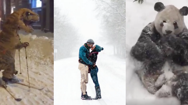 13 people and 1 animal who had way more fun than you during the 2016 blizzard.