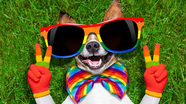 Woman learns her date's a huge homophobe after jokingly calling his dog 'gay'