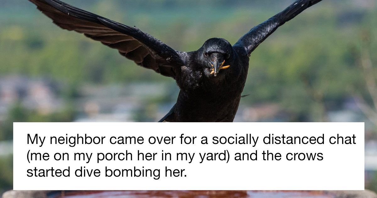 Woman shares story of how feeding local crows possibly saved neighbor's life.