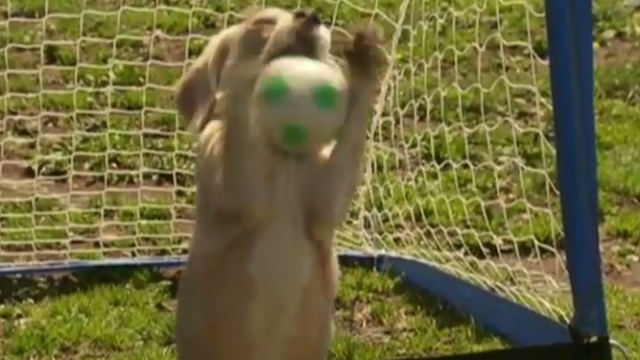 """If you watch one world record get broken today, make it """"the most balls caught with paws."""""""