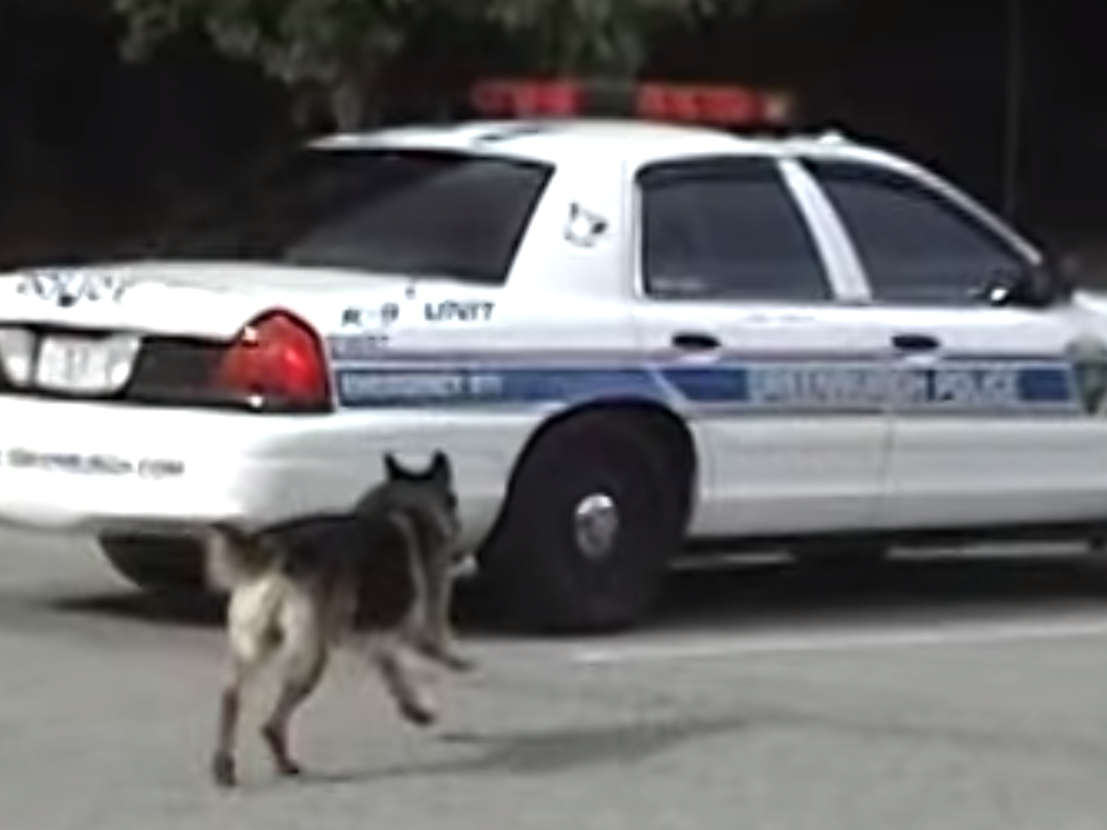 World's smartest police dog can get into the squad car by himself.
