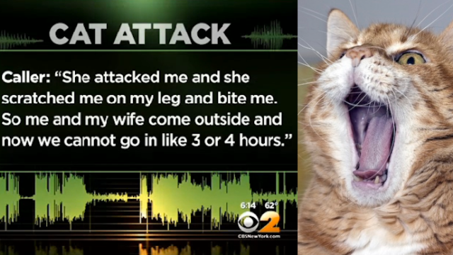 Yet another cat held its family hostage, forced them to call 911. Is this an epidemic?
