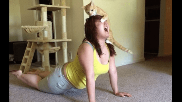 Celebrate Yoga Day with 13 images that will make you never want to do yoga again.
