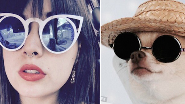 You Are Dog Now is the Twitter account that will introduce you to your dog doppelgänger.