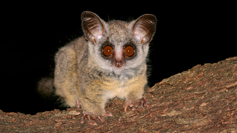 Pet store owner arrested for tipping a prostitute with a bush baby. Nothing could be more illegal.