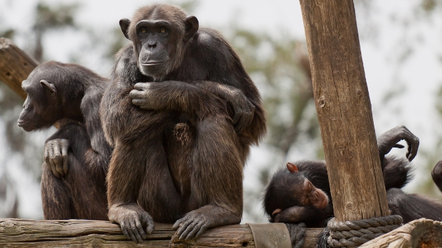 26 zookeepers share the interesting ways animals act when the zoos don't have visitors.