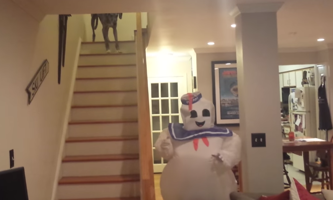 This dog is rightfully terrified of his human in a Stay Puft Marshmallow Man costume.