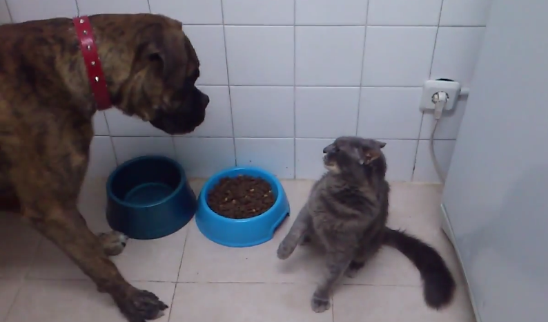 Here's a bunch of bully cats stealing some wimpy dogs' food because they can.