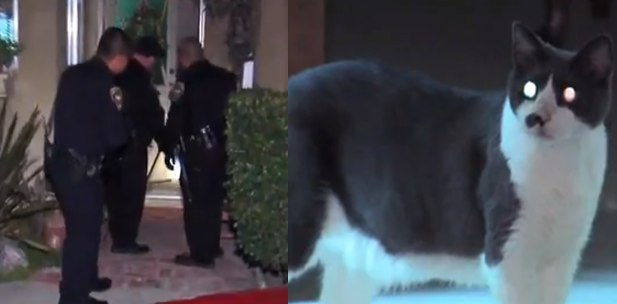 """Police in suburban standoff after family is taken hostage by """"ball of fury"""" housecat."""
