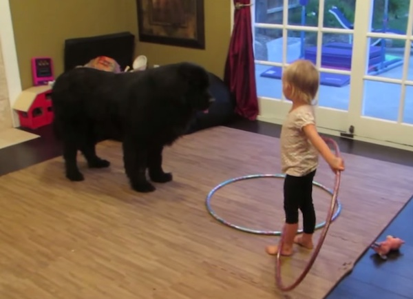 Little girl attempts to teach her very big dog how to hula hoop.