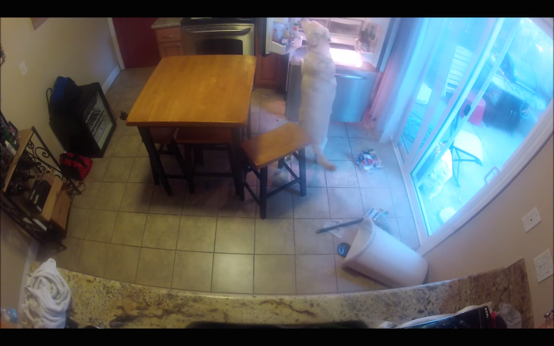 12-year-old dog has learned exactly how to empty out master's fridge & freezer.