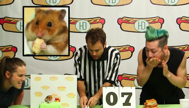 Tiny Hamster takes on Kobayashi in a hot dog eating contest.