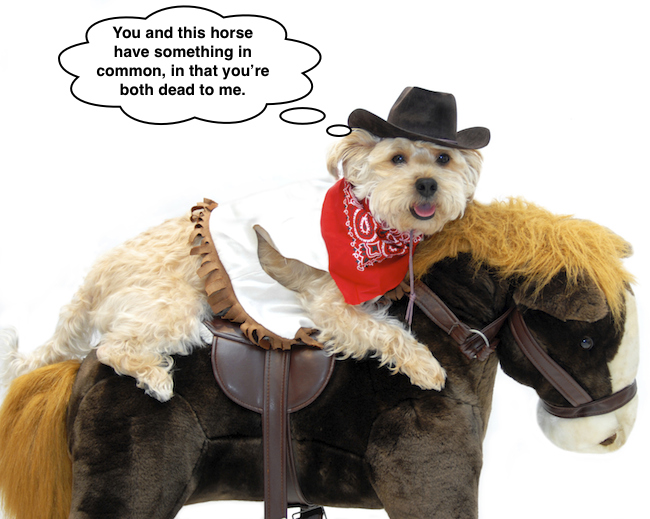 What your pets honestly think of their Halloween costumes.