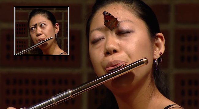 A butterfly landed on a classical flautist's nose during a music competition.