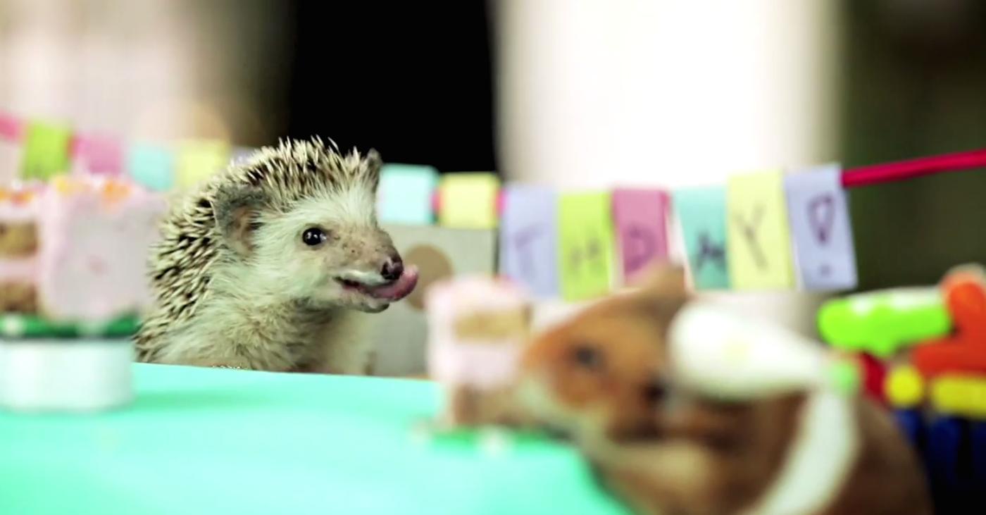 A Tiny Hedgehog Had A Tiny Birthday Party With Tiny Cakes For His