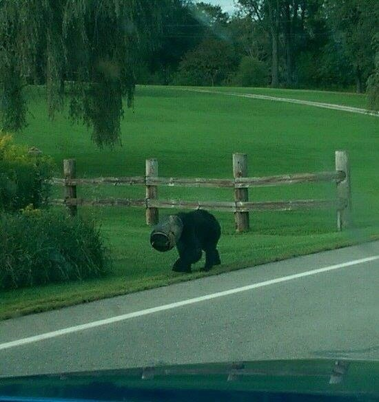 After two months with a bucket stuck on its head, animal loving strangers wrestled a bear to the ground and set it free.