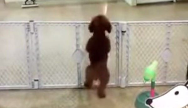 Adorable puppy spots its owner, completely loses its frigging mind.
