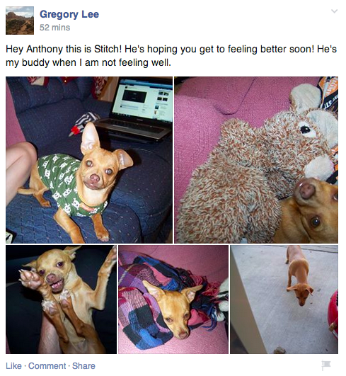 Thousands of people around the world are using photos of their dogs to help a teen battling cancer.