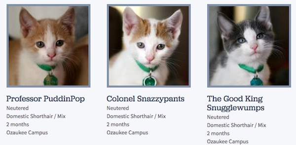 This woman who works at the Wisconsin Humane Society is awesome at naming cats.