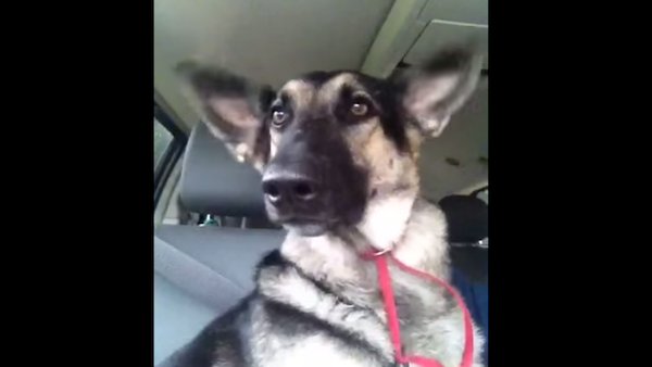 """Dog has a dance party with his ears to Flo Rida's """"Low."""""""