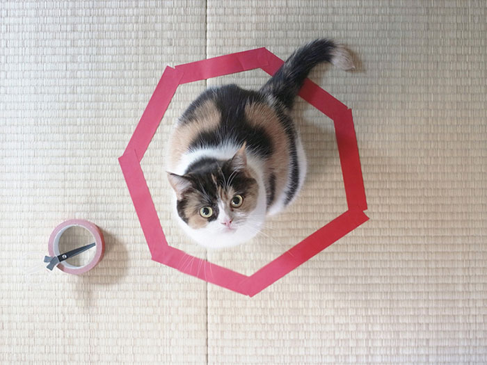 """The Internet comes full cat circle with """"cat circles."""""""