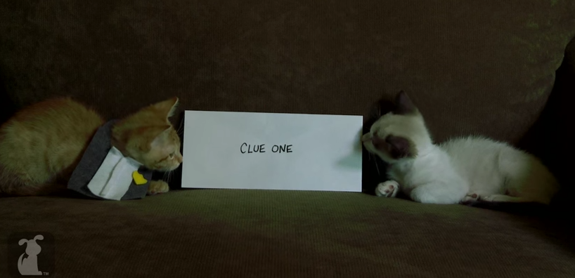 Someone remade 'Gone Girl' with nothing but cats.