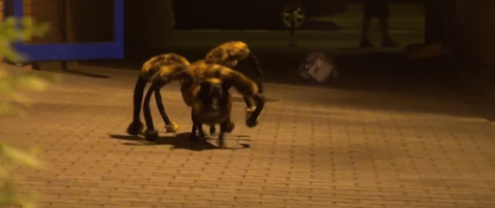 Someone put a terrifying spider costume on an adorable dog for the cutest scare prank on the Internet.