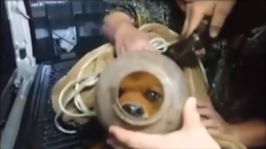 Christmas comes early for family who rescued a puppy with a jug stuck on its head.