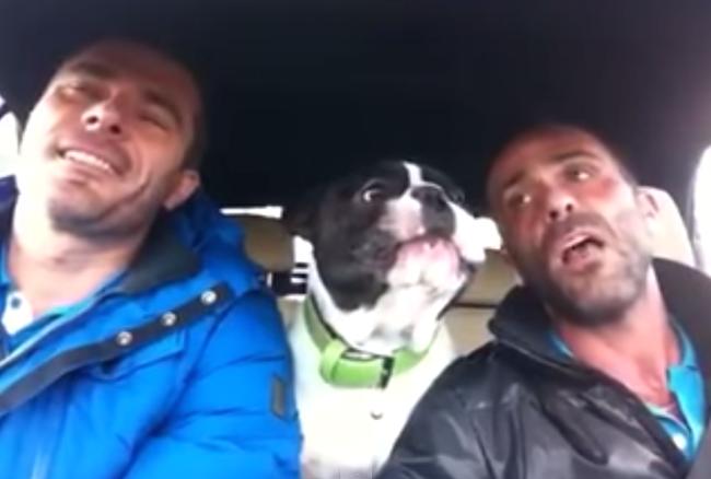 This French Bulldog singing along to Josh Groban will raise you up.