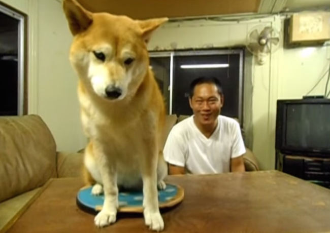 This guy has video proof that his dog does not like him.