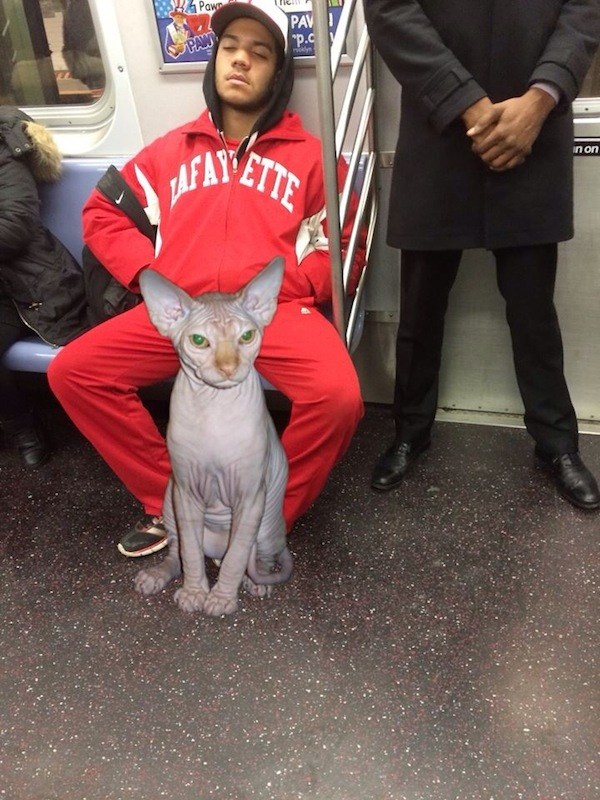 Someone figured out all those guys taking up too much room on the subway are just saving room for cats.