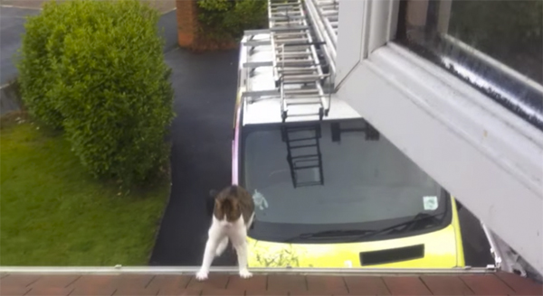 A daredevil cat makes an amazing jump from a van to a roof.