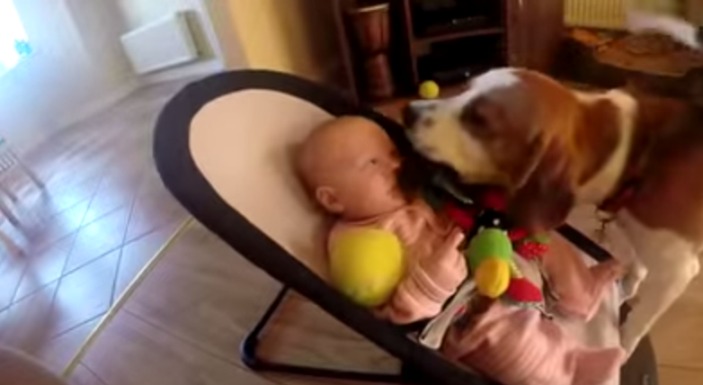 Thieving dog apologizes to baby for stealing her toy.