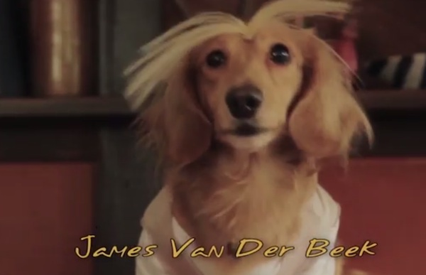 """A bunch of dachshunds act out your favorite scenes from """"Dawson's Creek"""" in """"Dachshund's Creek."""""""