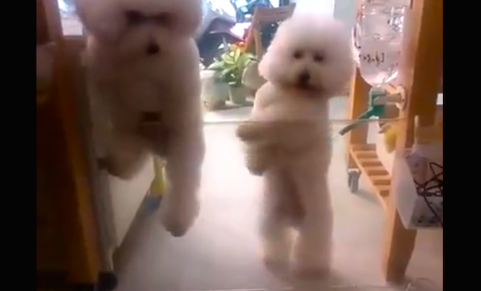 Every other dancing dog video you've seen is garbage compared to this.