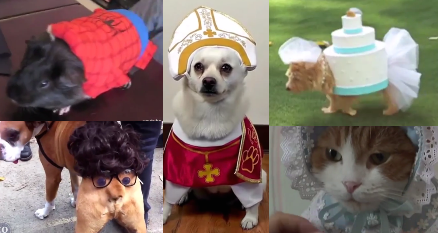 A monster mash-up (sorry) of pets in Halloween costumes to get you ready for the weekend.
