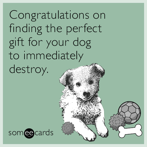 Congratulations on finding the perfect gift for your dog to immediately destroy.