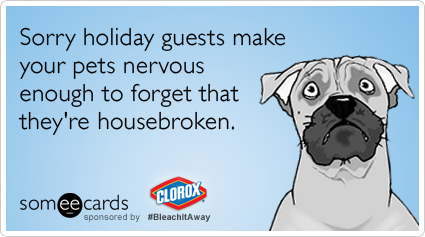 Sorry holiday guests make your pets nervous enough to forget that they're housebroken.