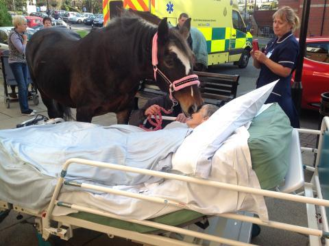 A horse went to a hospital to fulfill her dying human's wish, and to make the Internet sob.