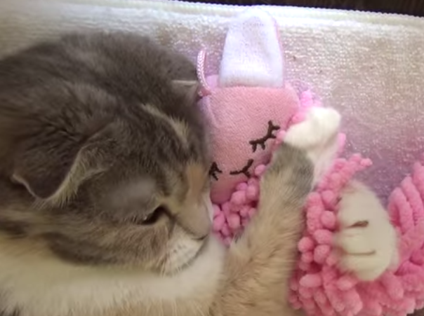 This cat loves sleeping with its pink fluffy bunny toy.