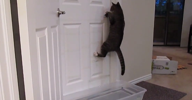This cat is the LeBron James of opening doors.